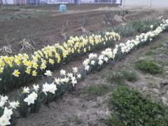 2011-04-18